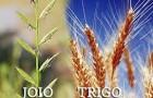 joio&trigo